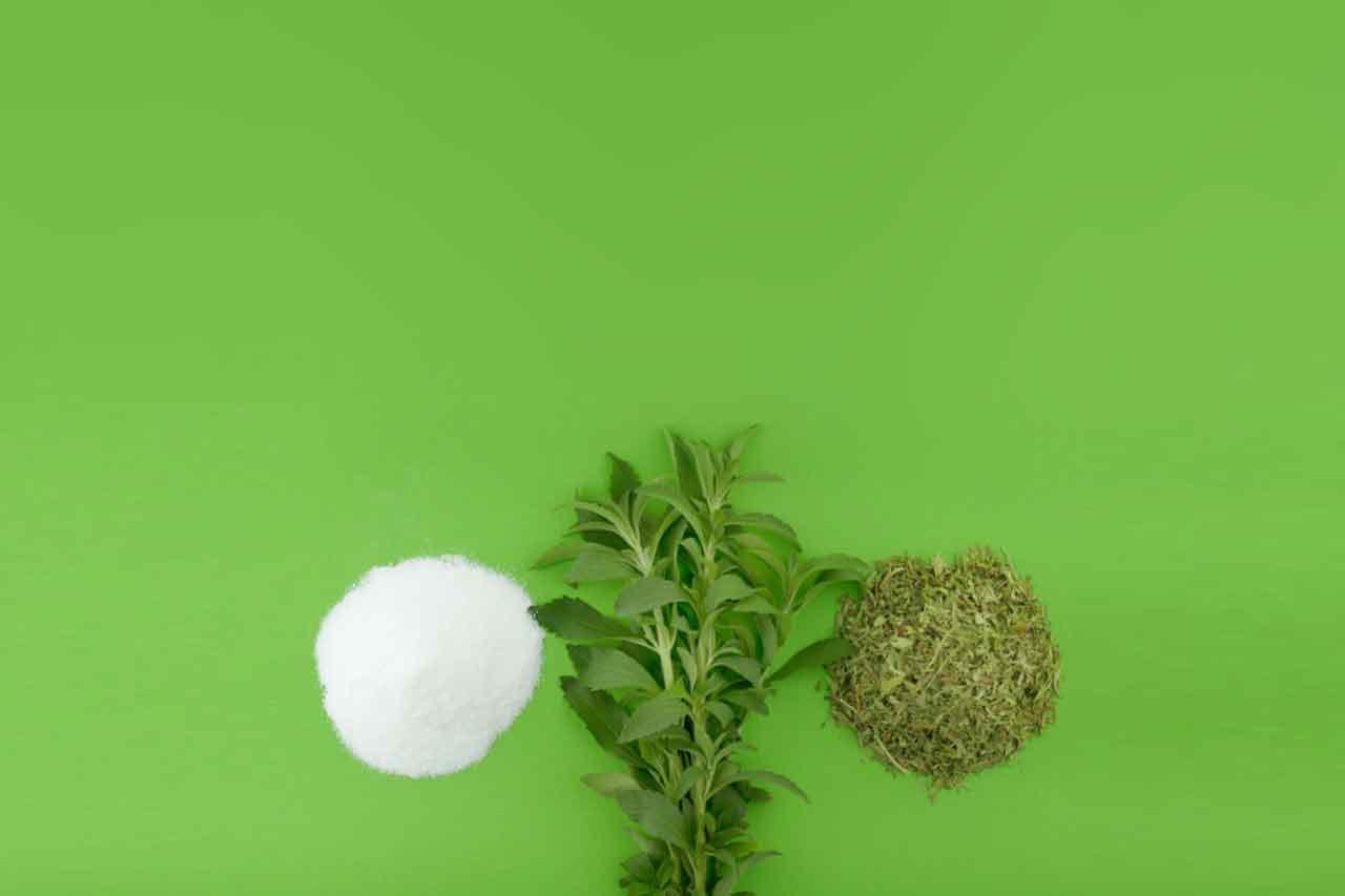 Stevia-Dominik-Chiaki-Asaari