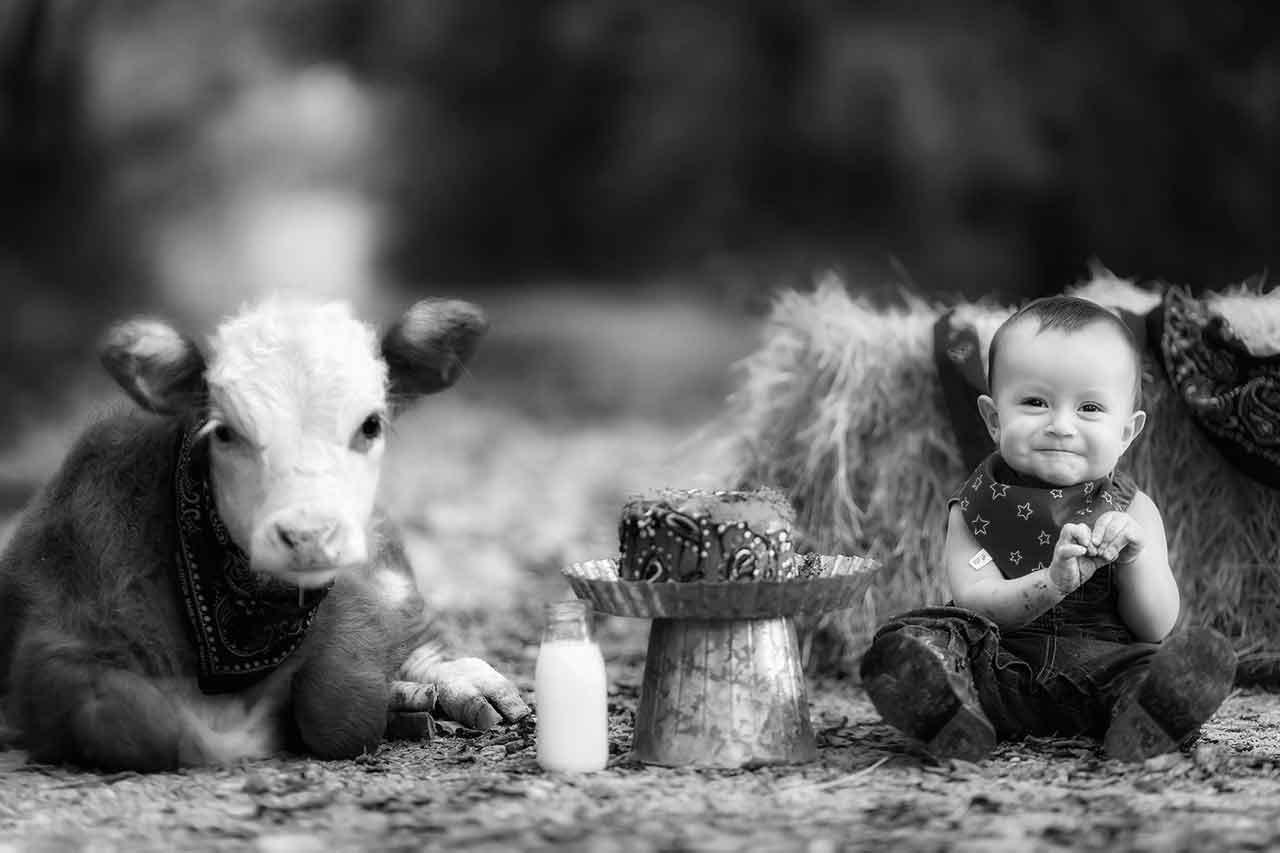 Susu-sapi-bagi-manusia