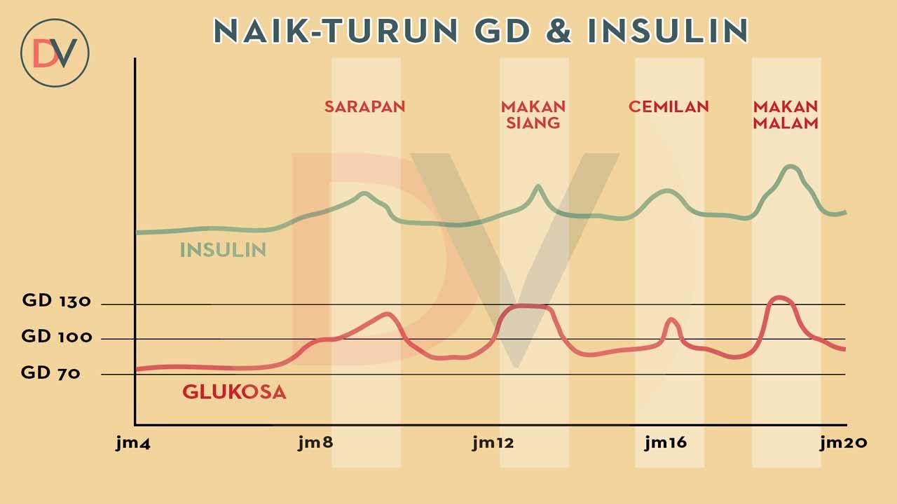 Normal-Insuln-n-Glucuse